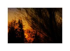 Winter Light #2 (ICM's) Tags: icm intentionalcameramovement multipleexposure trees landscape longexposure woodland