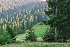 Trip to Mount Kukul-August-2018-7 (pavlo.malyshchak) Tags: travel mountains carpathians ukraine family summer vacation forest