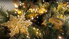 Christmas Snowflake Time (AreKev) Tags: christmassnowflake snowflake merrychristmas ussfranklin nx326 freedomclass federation starship starfleet startrek startrekbeyond hallmarkkeepsake hallmark keepsake christmastree christmas xmas tree led lights christmasornament ornament decoration festive bokeh macro sonycybershot sony cybershot sonydscrx100 dscrx100