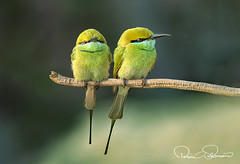 750_0725s (TARIQ HAMEED SULEMANI) Tags: sulemani tariq tourism trekking tariqhameedsulemani winter wildlife wild birds nature nikon