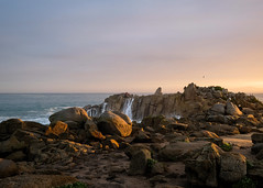 Lovers Point State Marine Reserve, Pacific Grove 1/18/19 (Sharon Mollerus) Tags: pacificgrove ca cfptig19