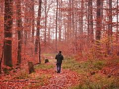 Bärensee (mireiatarres) Tags: autum wood forest trees bosque árbol madera hojas otoño camino