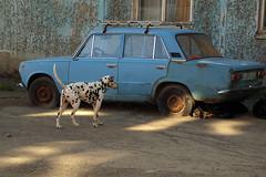 P8298020 (Бесплатный фотобанк) Tags: россия камчатка камчатскийкрай дворняжка дворняжки бездомныйпес бездомныесобаки бездомныепсы бездомнаясобака собака пес