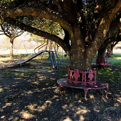 Shadow Challenge 2 (Corgibird) Tags: lightandshadows lightrays windom texas windomtexas thanksgiving sparkle trees parks chairs wroughtironfurniture playground swings slides gravel liveoaks whimsical fairyland grass bark warmcolors autumncolors