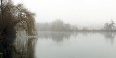 Fog on the water (roland_tempels) Tags: supershot nature water trees fog waasmunster belgium