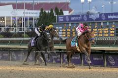Game Winner (Casey Lynn Photos) Tags: 2018copyright breederscup breeders kentucky horseracing racing horse horses gamewinner canon canonphotography canonusa canon7dmii canonlens canonphoto canonphotos