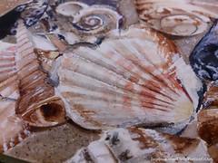 Summertime memory detail #1 (Daria Kucharczyk (LionheART)) Tags: art artist artwork sand drawing realistic beach sea shells sketchbook sketches sketching summer watercolor watercolour watercolors aquarelle