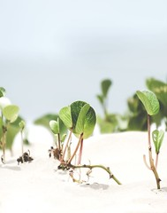 Up Close (Bron.Wolff) Tags: shapes bokeh close green leaves weeds art creative abstract nature sand beach