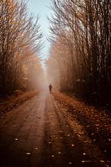 Frühnebel (kuestenkind) Tags: nebel herbst autumn fog northgermany knick