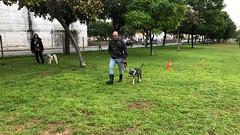 IMG_8512 (Doggy Puppins) Tags: educación canina adiestramiento canino perro dog