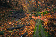 Autumn Colors (JasyZ) Tags: autumn nature forrest woods baum orange sony landscape germany
