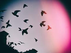 Birds (Calinore) Tags: france paris ville birds seagull mouette flicght vol pink rose sky ciel