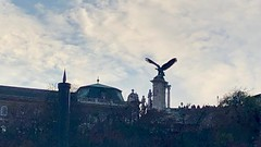 Turul (RobW_) Tags: turul statue mythical bird castle hill danube wine cruise budapest hungary sunday 18nov2018 november 2018