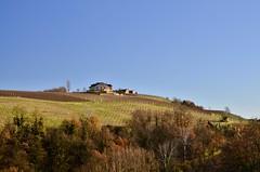 Vicinity of Barolo (Waldek P.) Tags: italy alpi alps włochy langhe piemonte piemont italia barolo grapes grapevine winogrono winorośl