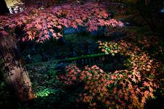 Autumn in Temple (kat-taka) Tags: temple autumn leaves tree shadow traditional japan japanese shrine ruine