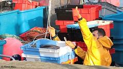 Yellow (patrick_milan) Tags: jaune yellow worker sailor marine mer fisher boat aberwrach man portrait