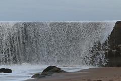 IMG_0551 (monika.carrie) Tags: monikacarrie wildlife scotland aberdeen waves