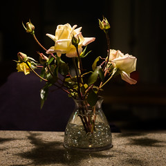 D24899E7 - Last Roses of the Year (Bob f1.4) Tags: last roses year white rose orange some princess diana that never developed their color night indoors dark glass vase background light from above