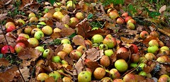 Des pommes pour le gibier (mamietherese1) Tags: ngc world100f