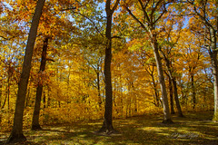 Light, Shadow, and Color (david.horst.7) Tags: forest leaves trees timber woods fall autumn shadows backlit backlighting