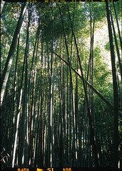 takebayashi (WilliamJosephJefferson) Tags: provia100f pentax45~85 pentax645 film analog art