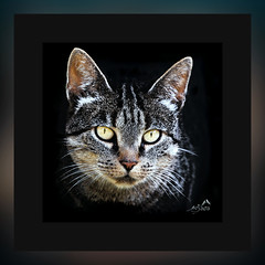 _MGL0382 MIAU (SØS: Thank you for all faves + visits) Tags: animal art artistisk kunstnerisk manipulation kunst solveigøsterøschrøder fractals farver colors form cat dyr kat portræt portrait