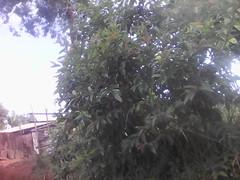 plante inconnue (semowilson) Tags: plante nature environnement ecologie ecology vegetation vegetaux verdure biodiversite biodiversity biologie biology