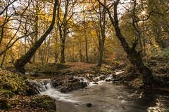 Udazkenaren atea. La puerta del otoño. (Txaro Franco) Tags: udazkena otoño fall ucieda cantabria parque natural parquenaturaldesajabesaya bosque basoa arroyo seda