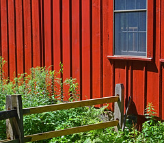 Red Shed  - Wooden Fence (RockN) Tags: pleasantvalleywildlifesanctuary august2018 1000placesusa lenox massachusetts newengland