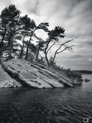 Between the Rock and the Sky (A.Reef) Tags: monochrome bw rocky trees tough ontario