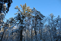 Rutland, Vermont - 1/13/19 (myvreni) Tags: vermont winter snow nature outdoors