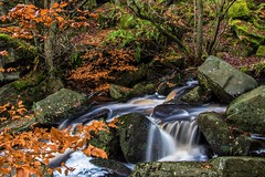 Autumnal (gavsidey) Tags: water rock beech trees burbage brook padley gorge stream rocks landscape autumnal colours orange green ngc d500 countryside outside