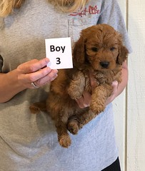 Darby Boy 3 pic 3 12-9