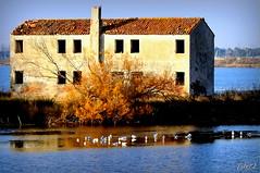 ___ la vecchia casa (erman_53fotoclik) Tags: canon eos 500d casa vecchia pianta finestre camino abbandono cespuglio acqua riflesso uccelli gabbiani