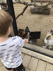 "Paul Looks at Chickens • <a style=""font-size:0.8em;"" href=""http://www.flickr.com/photos/109120354@N07/46376319552/"" target=""_blank"">View on Flickr</a>"