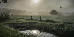 Morning light and wet grass (andredekok) Tags: nature landscape sky mist fog bird sunshine textures sonya7r2 fe1635f4