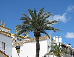 Pooves And Palms! ('cosmicgirl1960' NEW CANON CAMERA) Tags: marbella spain espana andalusia costadelsol puertobanus blue sky water travel holidays green yabbadabbadoo