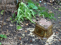 January 1st, 2019 Frost protection for the rhubarb shoots (karenblakeman) Tags: cavershamgarden caversham uk babingtonsleeks rhubarb plantpot 2019 2019pad january reading berkshire