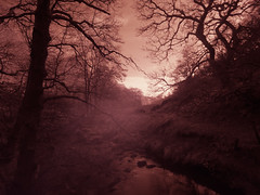 Deep in the dale (northsky) Tags: landscape stream beck water trees nature outside north yorkshire moors nationalpark atmosphere sky winter misty