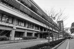 Kobe City Hall (Hideki-I) Tags: kobe japan nikon d850 2470 bw blackandwhite 白黒 黑白