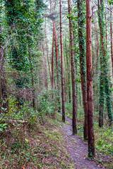 Peak Hill-1-9 (Sheptonian) Tags: somerset rural scenic landscape trees fauna grassland