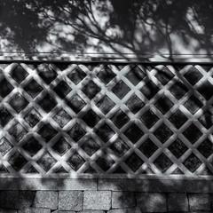 Shadows on a latticed wall (Tim Ravenscroft) Tags: wall lattice shadows shady temple kyoto japan hasselblad hasselbladx1d monochrome blackandwhite blackwhite