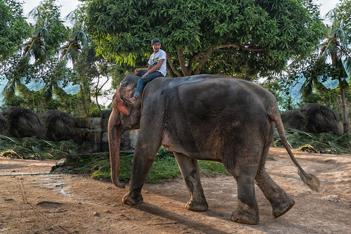 Elephant with his Mahout