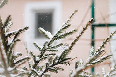 in the yard (Nika Watson) Tags: ukraine nature weather winter cold snow snowing yard tree firtree window blur canon 50stm 50mm