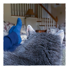 Quality TIme Together... (Timothy Valentine) Tags: 2018 happiness quinnomannion happycaturday 1118 home cat eastbridgewater massachusetts unitedstates us