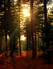 The Call of the Forest (barbara_donders) Tags: natuur nature fall autumn herfst forest bos red rood sunset zonsondergang licht lichtinval light sunbeams zonlicht bomen trees mooi prachtig beautiful magical magisch