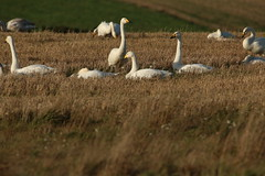 IMG_4849 (monika.carrie) Tags: monikacarrie wildlife scotland