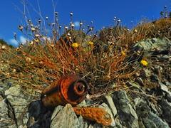 Rusty tank and wild plant (panoskaralis) Tags: rusty tank flower wildflowers plants wildplants nature macro bluesky green yellow rocky lesvos lesvosisland mytilene greece greek hellas hellenic nikoncoolpixb700 nikon nikonb700 greekisland greeknature