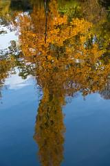 Herbst Impression aus dem Stadtgarten Karlsruhe (KaAuenwasser83) Tags: herbst impression stadtgarten karlsruhe bäume baum farben laub bunt stimmung wege himmel gelb pflanzen park garten anlage gebiet ort stadt november 2018