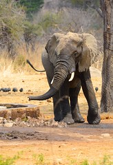 _DSC9034 (acomb) Tags: tanzania roadtrip ruaha tandala